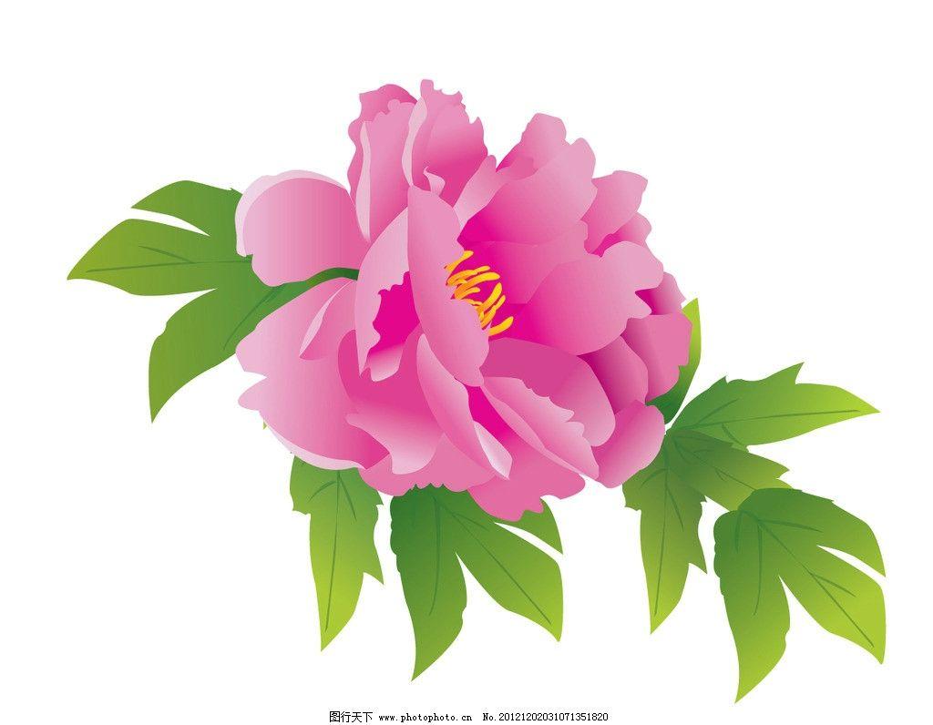 单个花 绿色花叶 粉红牡丹 红色牡丹 其他设计 广告设计 矢量 ai