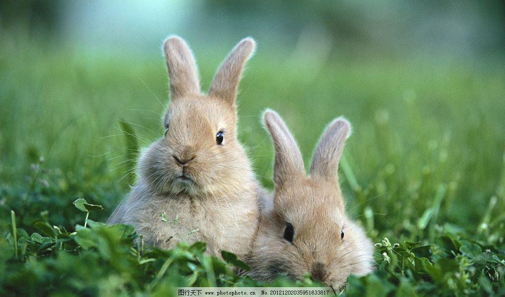 草地上的小兔子高清壁纸