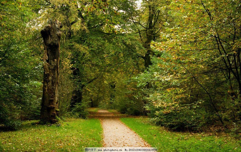 金色夕阳 秋天 秋天的树林 树林 树 道路 小径 300dpi jpg 自然风景