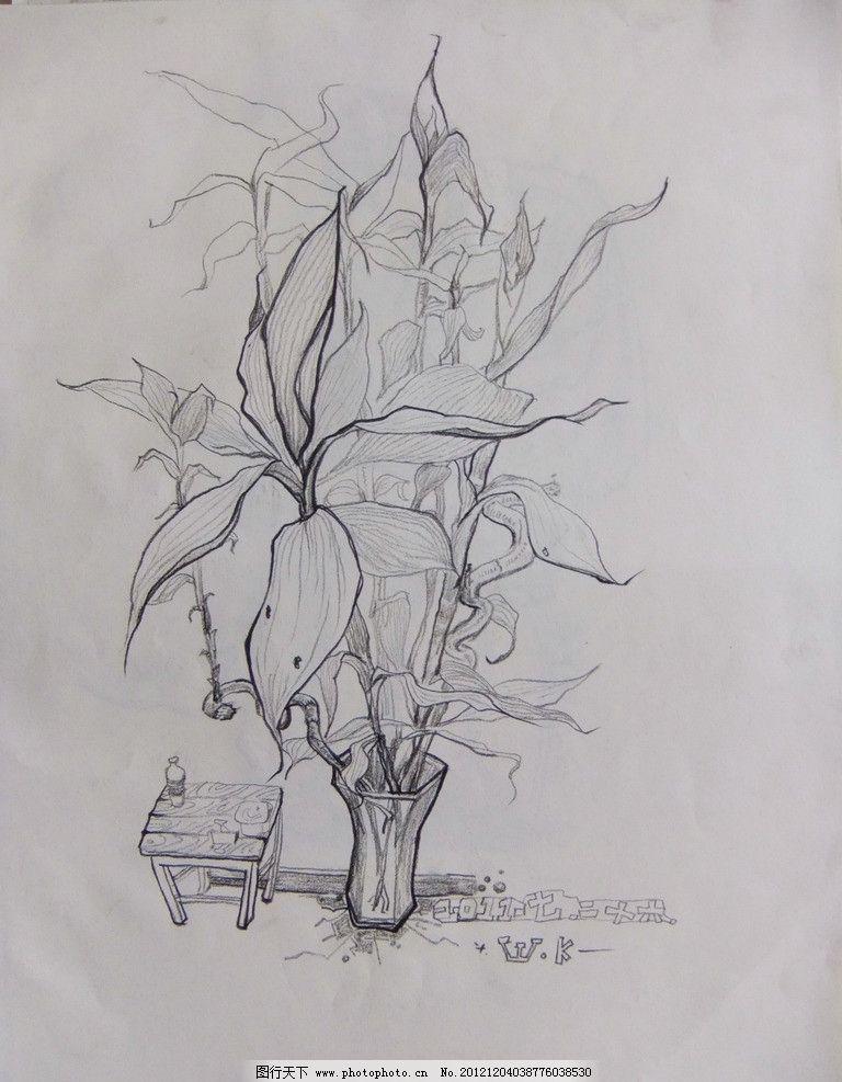 速写 植物 花 线描 炭笔质感 美术绘画 文化艺术 摄影 72dpi jpg图片