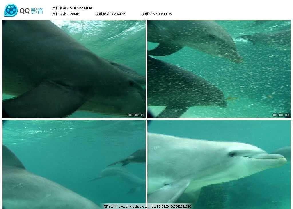 深海 潜水 海水 海浪 大海 海洋 海洋生物 海洋动物 哺乳动物 自然