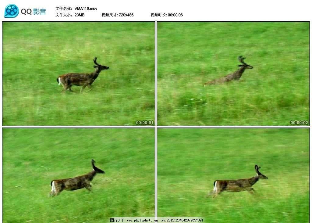 奔跑的小鹿视频实拍素材