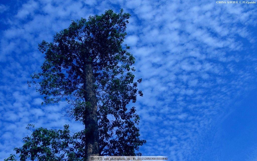 树冠映蓝天 高大树冠 树木 绿树 树叶 树枝 蓝天 白云 树木树叶 生物