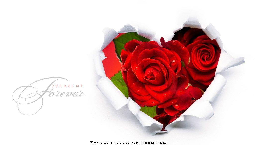 玫瑰 花朵 玫瑰花 玫瑰花朵 鲜花 花瓣 叶 破纸 花草 生物世界 设计