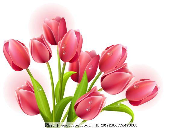 花朵 花卉 素材 鲜花 花卉 花朵 鲜花 怒放 矢量 素材 矢量图 其他
