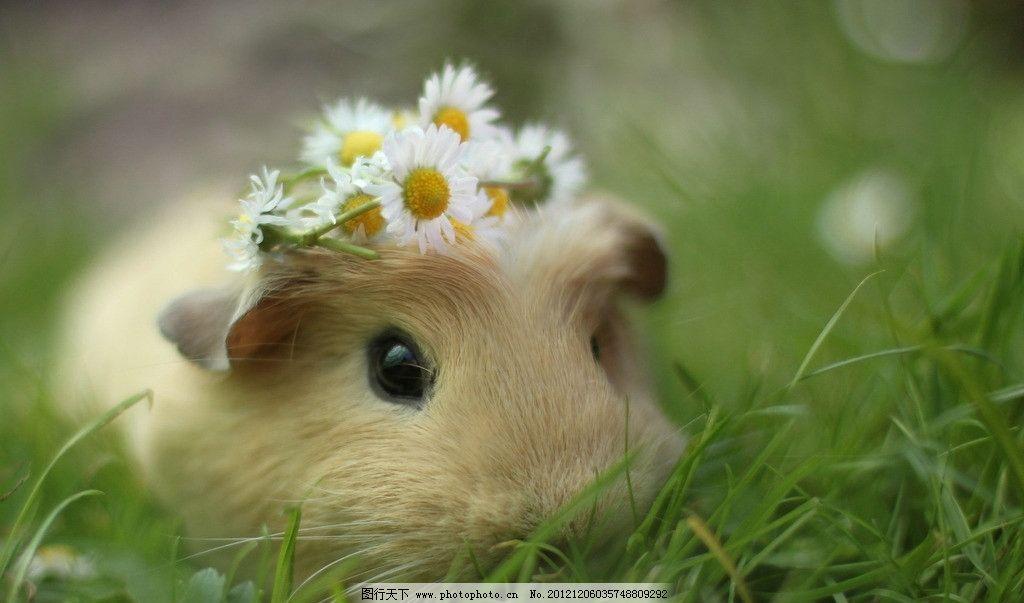 仓鼠 动物 可爱 草丛 雏菊 花草 生物世界 摄影 72dpi jpg