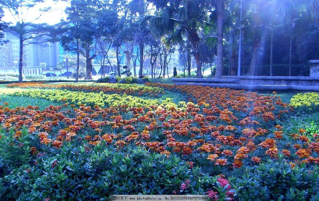 花圃 鲜花 满园 光影 风景 摄影