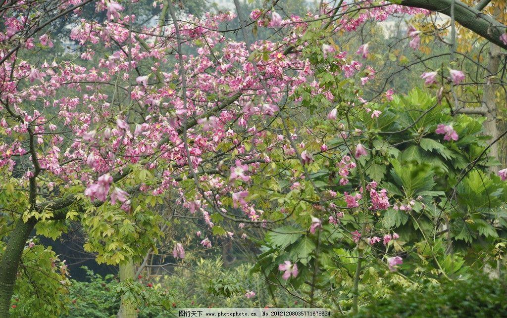 花树 广州 晓港 公园 植物 花草 树木 夕阳 树林 绿地 草地 植被 红花