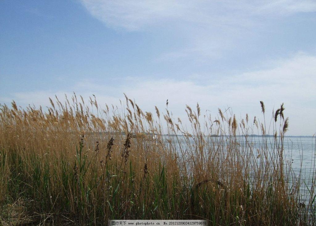 青格达湖 旅游 风景 杂草 天空 自然风景 旅游摄影 摄影 72dpi jpg
