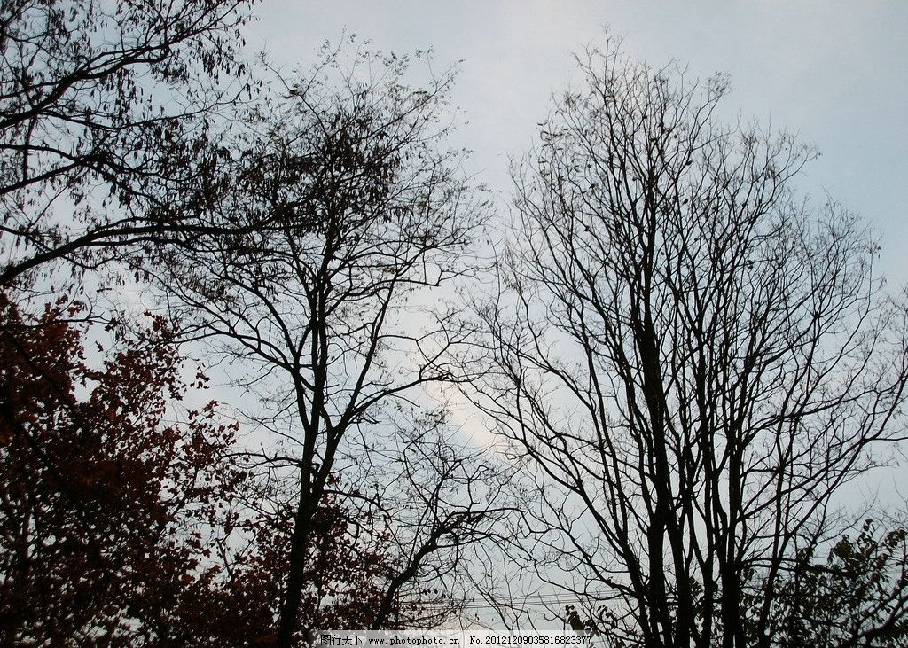 枯树枝 秋景 落木 秋天 枯枝 阴郁 树木树叶 生物世界 摄影 230dpi