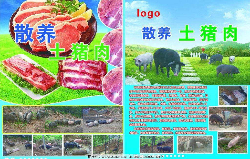 黑猪 猪肉宣传 好肉 猪肉 土猪肉 农家猪 猪 新鲜猪肉 dm宣传单 广告