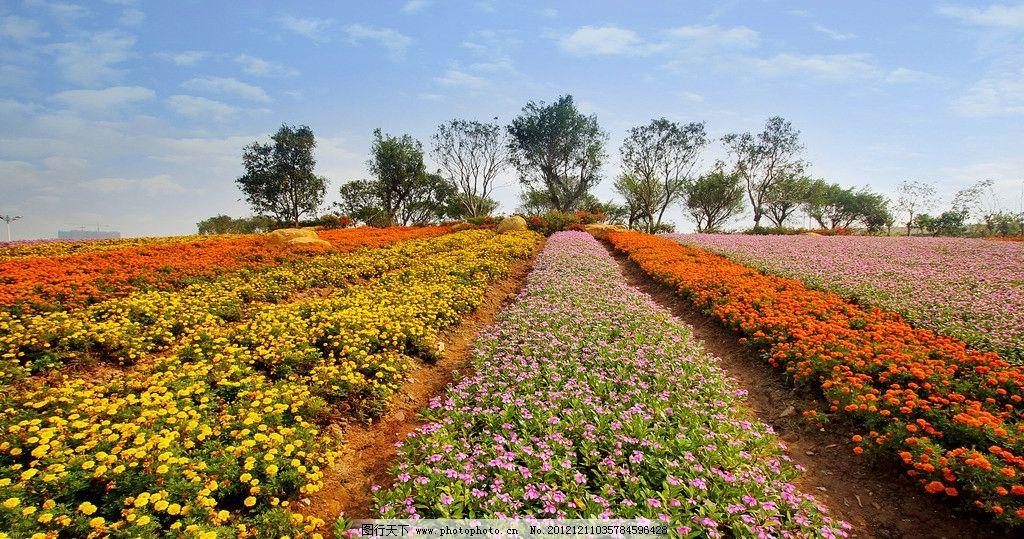 广角花海 花草 植物 蓝天 树木 园林 广角 广州 花花世界 生物世界