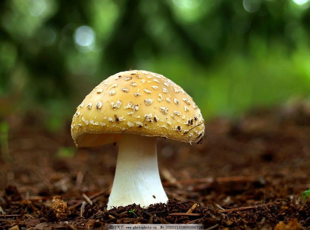 轻泥蘑菇手工制作大全