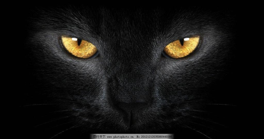 黑猫 眼睛 猫眼 野生动物 生物世界 摄影 300dpi jpg