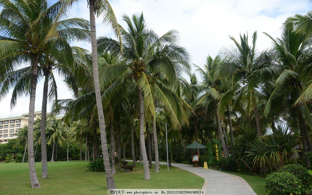 椰林小径 三亚 亚龙湾 海南 蓝天 白云 椰树 草坪 小径 国内旅游 旅游