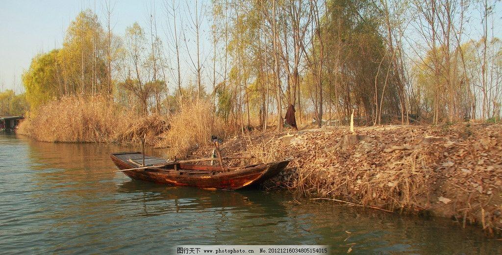湖畔 微山湖 小船 秋天 湖水 芦苇 柳树 自然风景 自然景观 摄影 350d