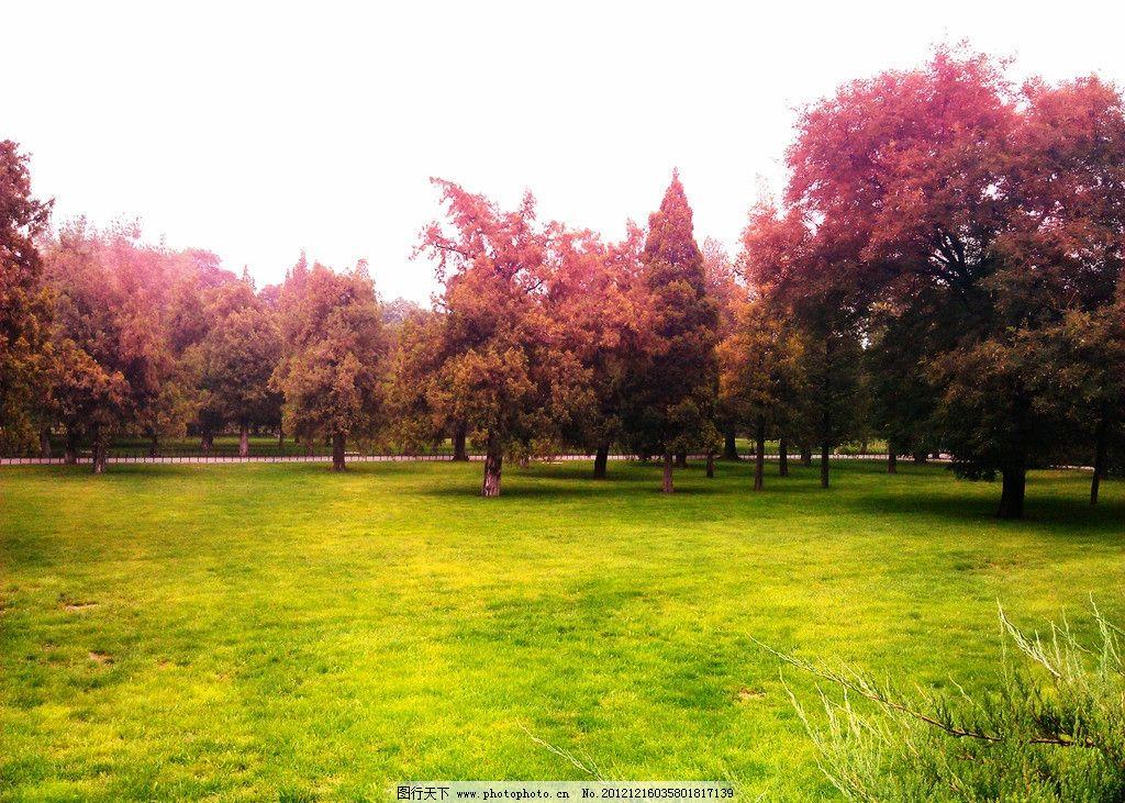 树林 植物 园林 绿色 草地 天空 树木树叶 生物世界 摄影 300dpi jpg