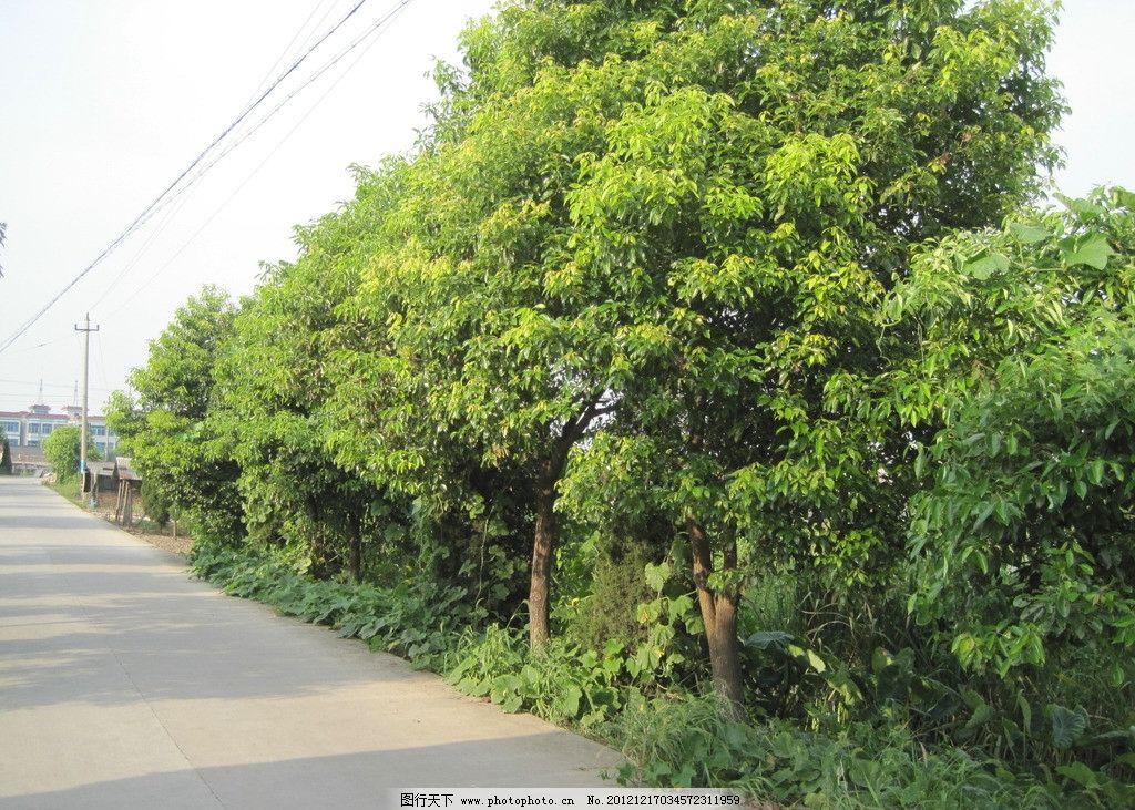 路边绿化 绿化 树木 田园风光 自然景观 摄影 180dpi jpg