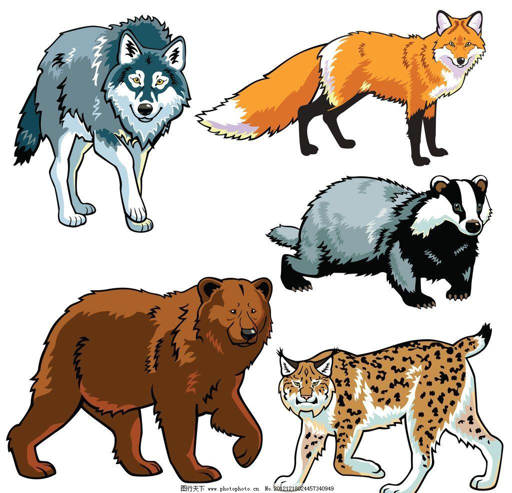 野生动物 狗熊 狼 狐狸 豹子 矢量