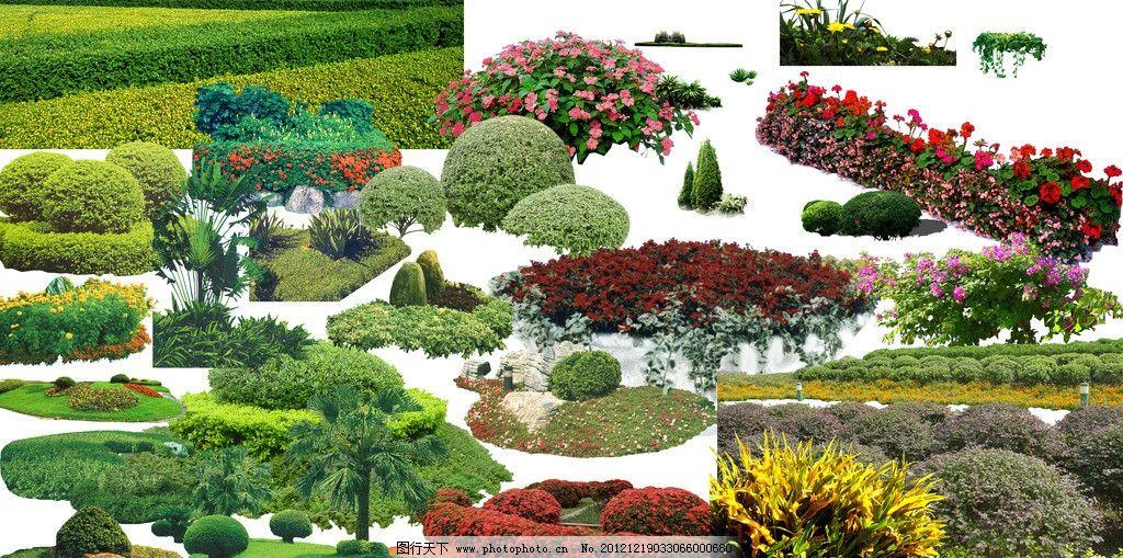 园林素材 植物素材 乔木素材 景观素材 素材 乔木 地被 灌木 psd分层