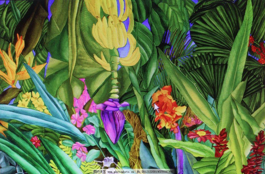 热带植物绘画图片