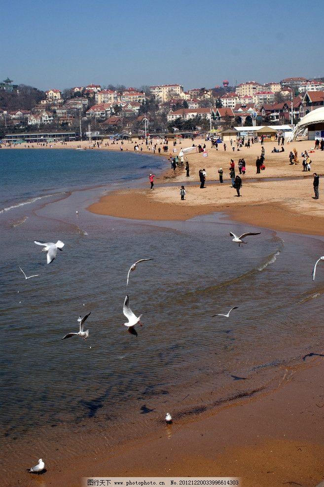 青岛海水浴场的海鸥 青岛金沙滩 海鸥 海水浴场 夏日海风 国内旅游