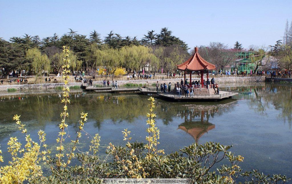 青岛中山公园 樱花 水上楼台 自然风景 旅游摄影 摄影 72dpi jpg