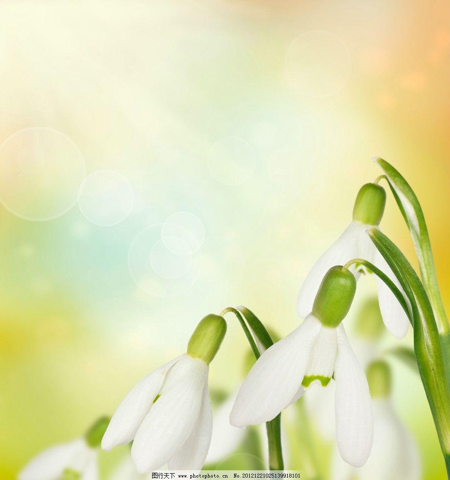 微信头像 图片 大全 花朵