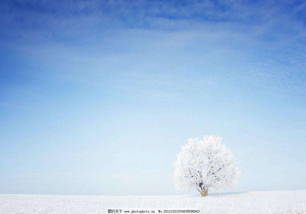 雪景 雪 大雪 下雪 小树 雪地 冬天 寒冬 自然风景 自然景观 摄影 300