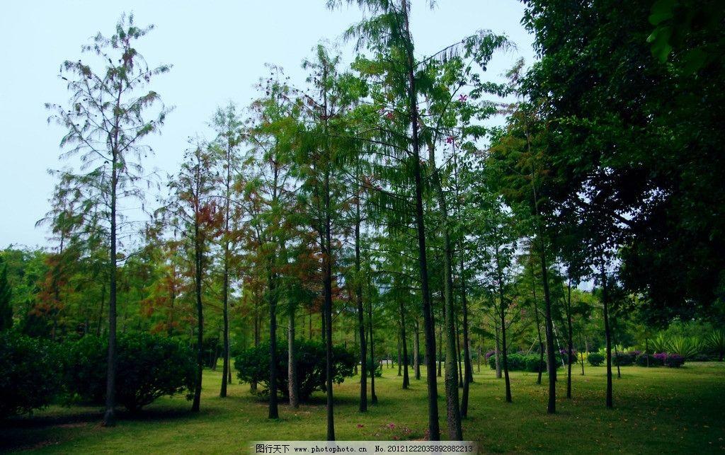 城市风景 园林树木图片