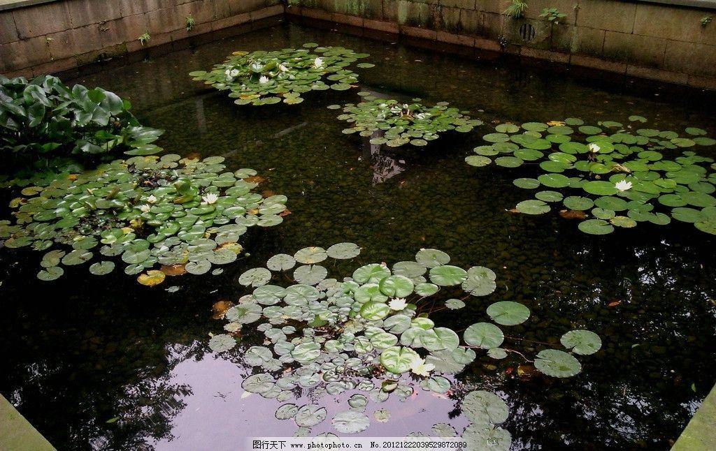 杭州郭庄 中国古典园林 中式园林 园林景观 荷叶 园林建筑 建筑园林