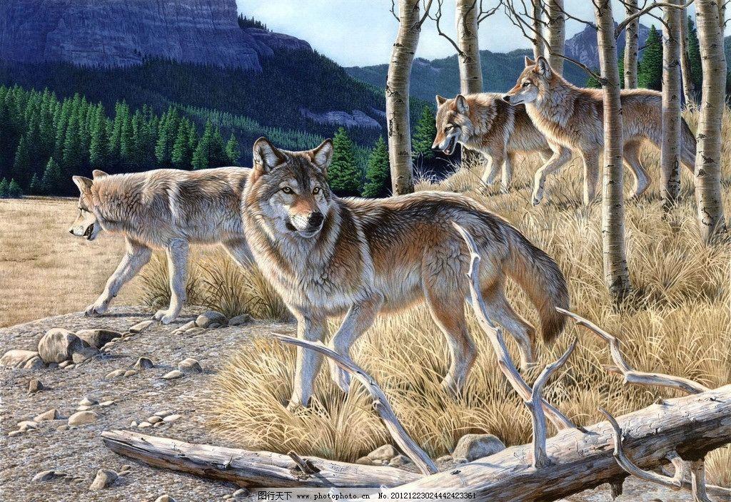霸气动物图片群狼