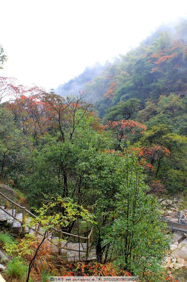 婺源风景 红叶子 绿树 石头 石阶 国内旅游 旅游摄影