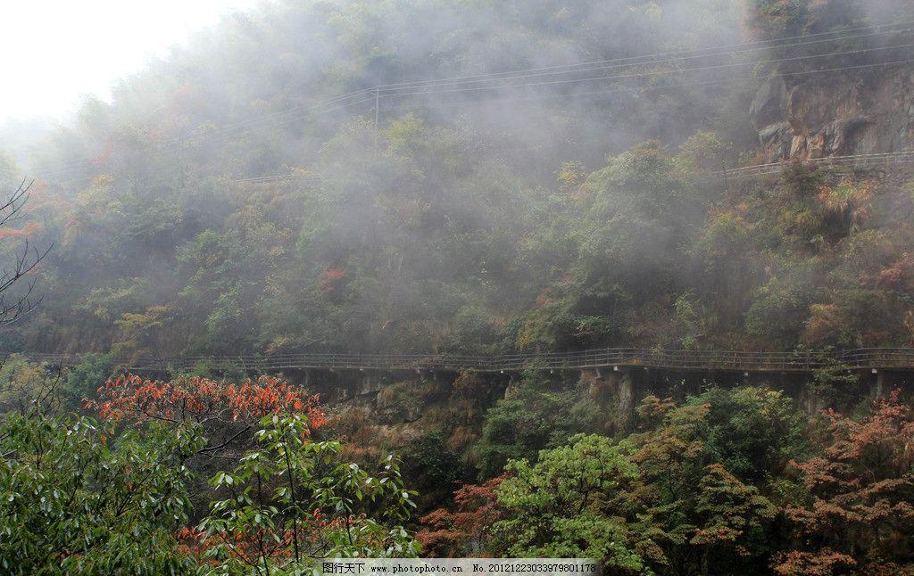 婺源风景 红叶子 绿树 山路 雾 国内旅游 摄影