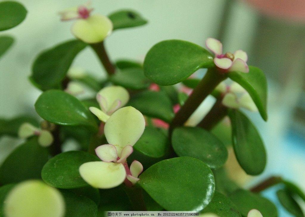 植物 花辨 高清 花草 生物世界 摄影 314dpi jpg