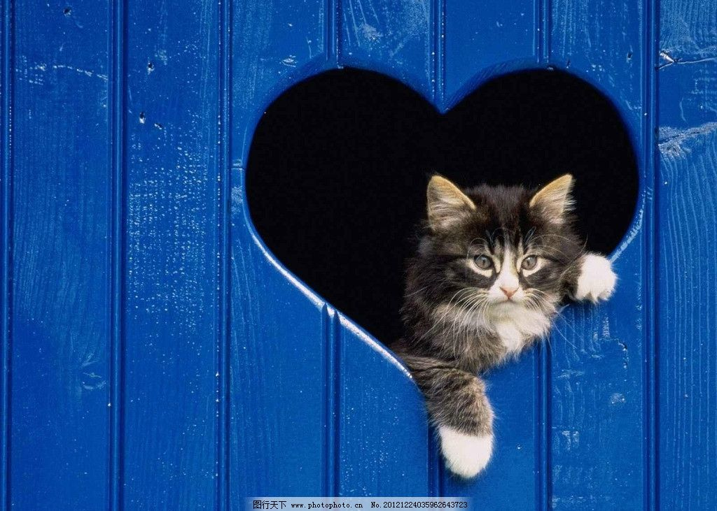 爱心猫 小猫 心形 可爱 调皮 家禽家畜 生物世界 摄影 72dpi jpg