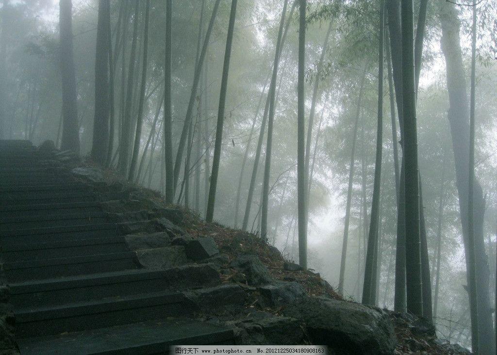 竹林 大雾 雾蒙蒙 仙境 天目山风景 雨天登山 幽静 世外桃源 山区