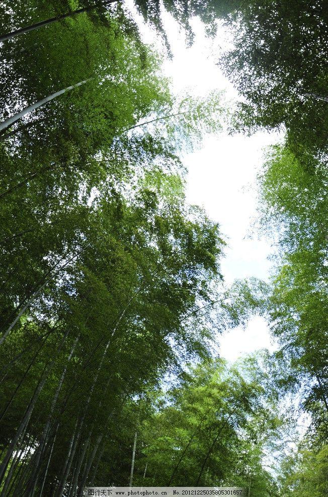 竹林 蓝天 竹子 竹叶子 绿叶 树木树叶 生物世界 摄影 300dpi jpg图片