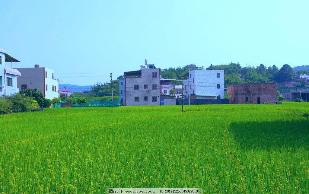 乡村风景 田园风光图片