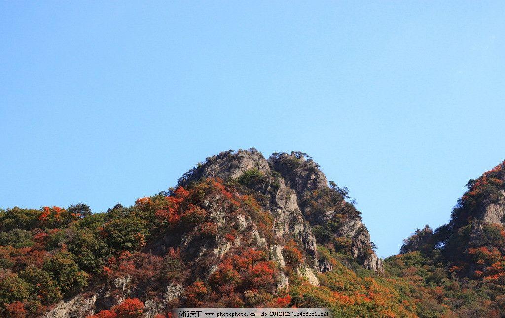 山上的枫树林图片,枫叶 山峦 关门山 蓝天 风景 摄影