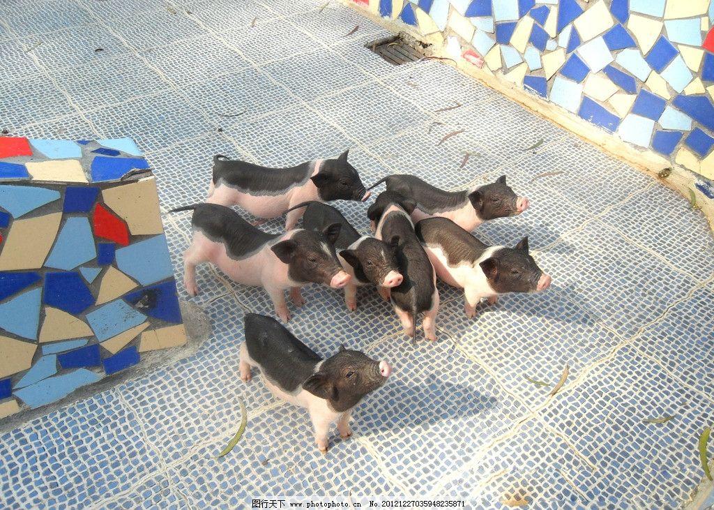 小猪 广州 动物园 家禽家畜 生物世界 摄影 96dpi jpg