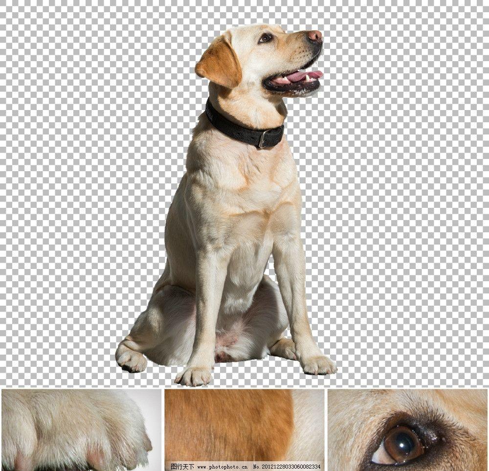 动物带字忠诚图片大全