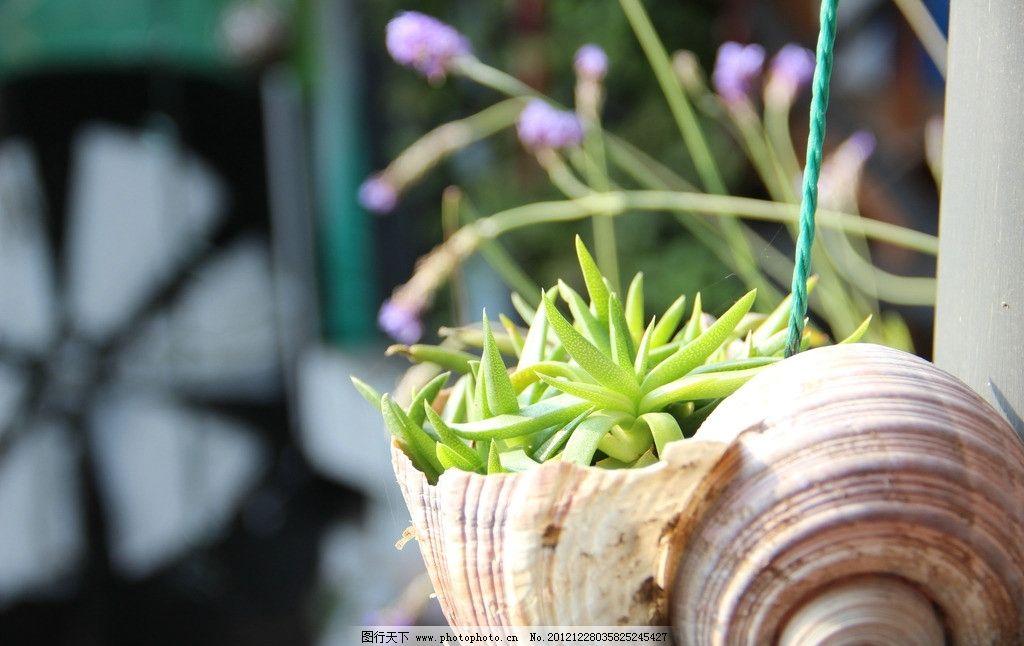 植物 绿色 近距离 芦荟 树木树叶 生物世界 摄影 72dpi jpg