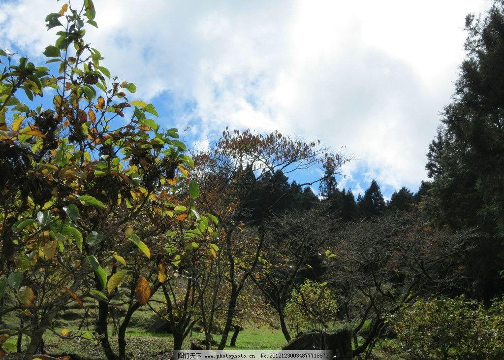 森林 蓝天 白云 大树 草地 自然风景 自然景观 摄影 180dpi jpg