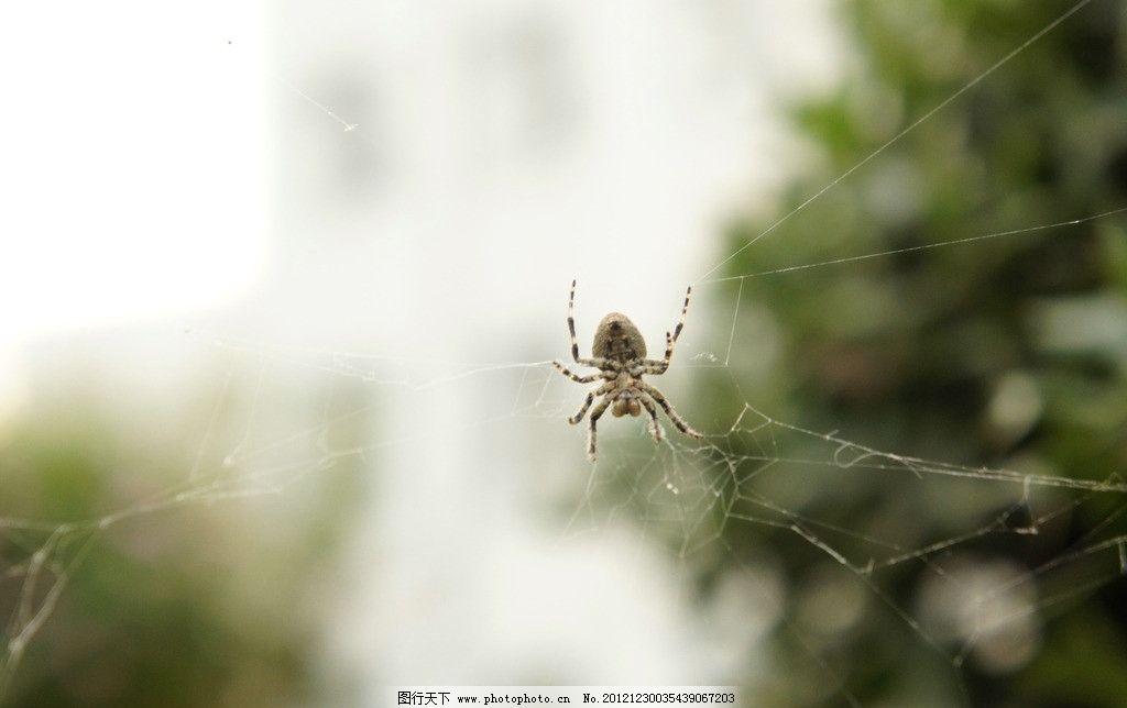 网上的蜘蛛 蜘蛛网上的蜘蛛 节肢 昆虫 动物 节肢动物 绿色背景