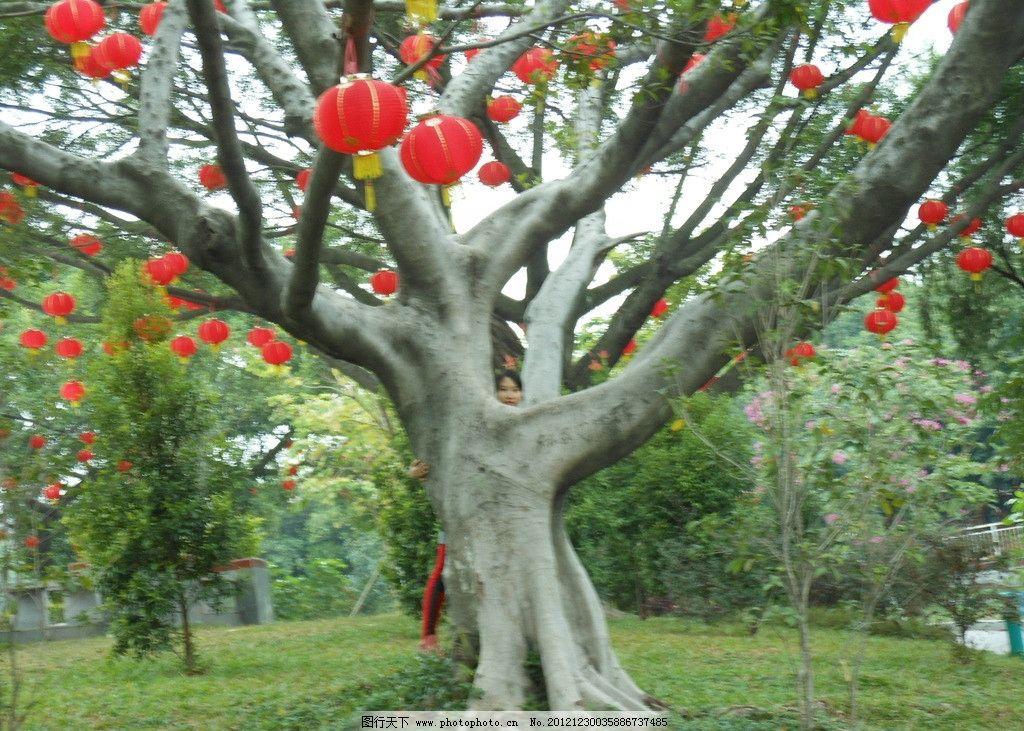 喜庆灯笼 喜庆 灯笼 大树 挂灯笼 树木树叶 生物世界 摄影 300dpi jpg