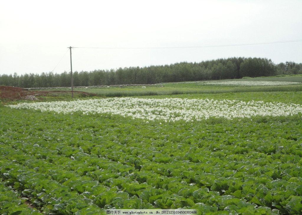 蔬菜种植基地图片