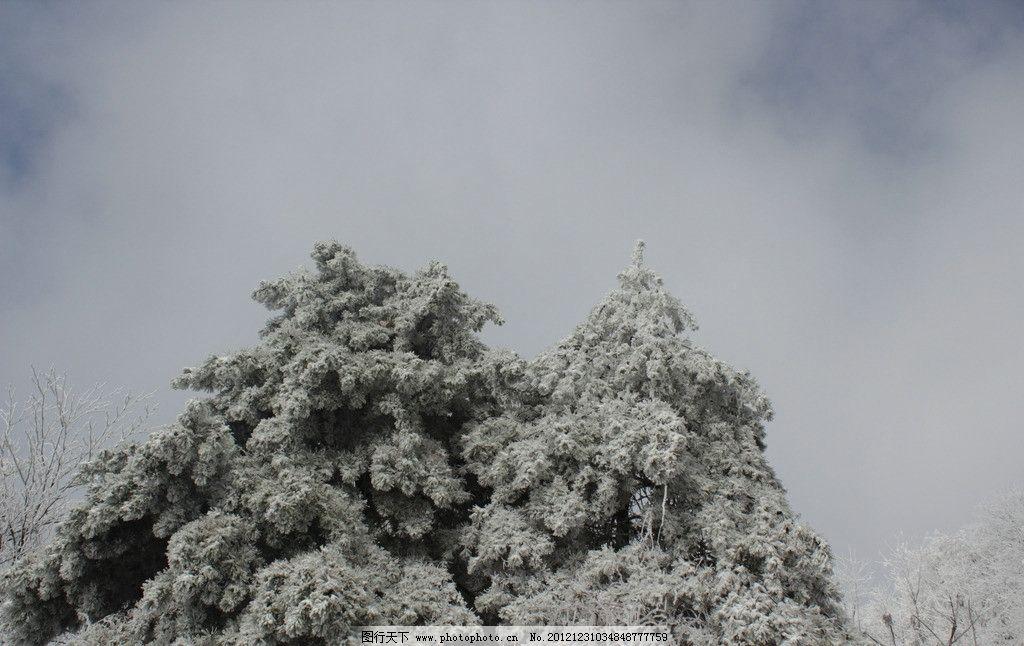 圣诞树 张家界 五银堡 白雪 天空 冬季 自然风景 自然景观 摄影 72dpi